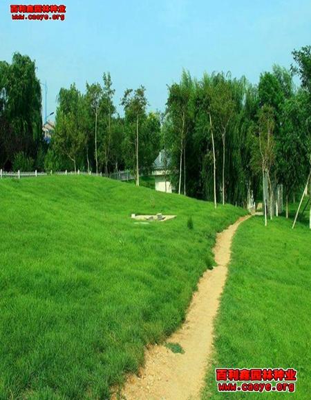 草坪种子护坡王