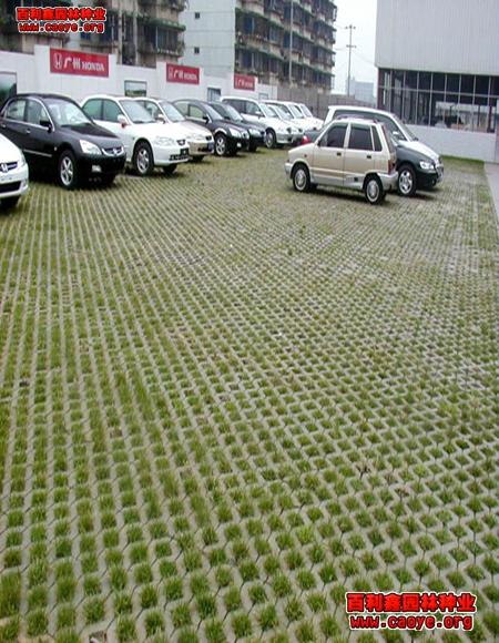 河南批发护坡草种