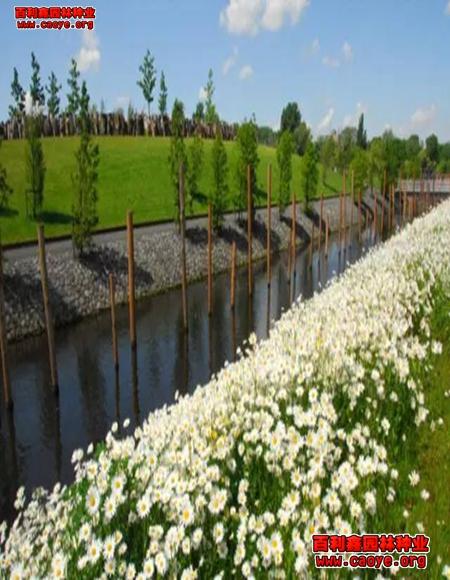 边坡绿化草种抗冻的,园林绿化用的草花有哪些