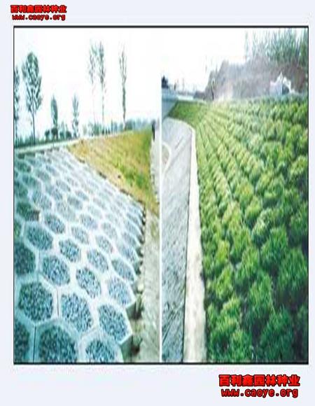 西藏绿化草种批云 重庆,撒草籽要铺回填土吗