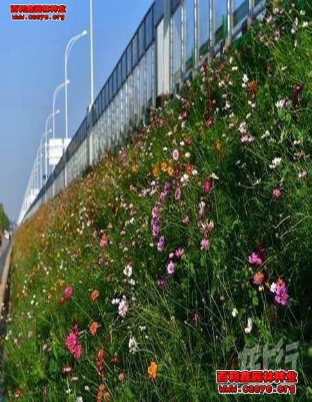 清远园林绿化草种类,撒播草种
