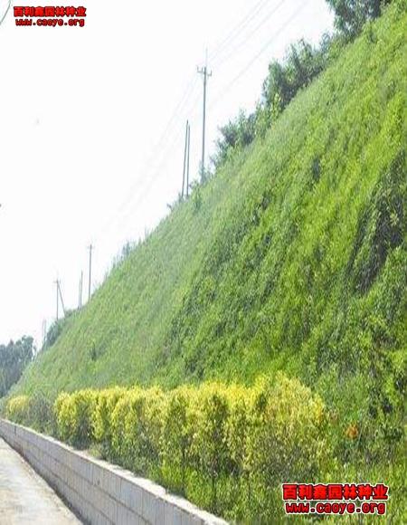 优质绿化草种子多少钱一斤,护坡撒草籽什么地方有卖的