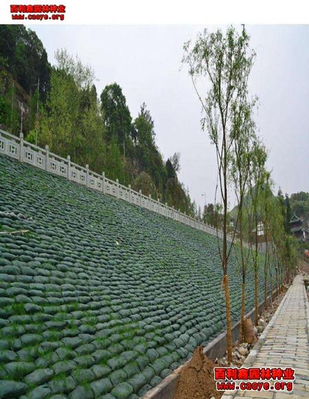 绿化草种草福广东 价格,人工撒草籽 种子