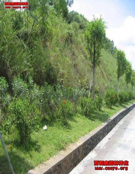 西藏绿化草种批发 云南,生态基材喷撒草籽价格