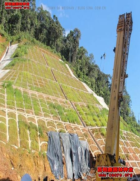 陕西常用绿化草种 批发,冬天撒什么草籽