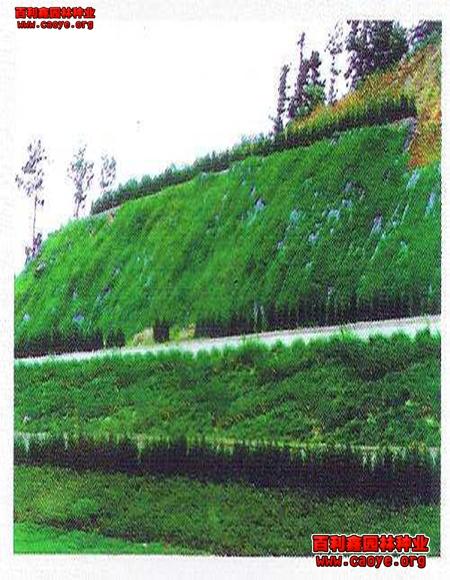 护坡 草种去哪里买便宜