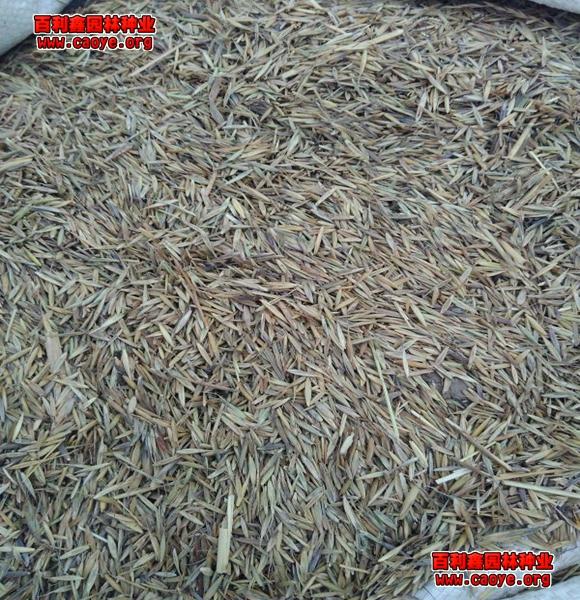 护坡灌木种子价格
