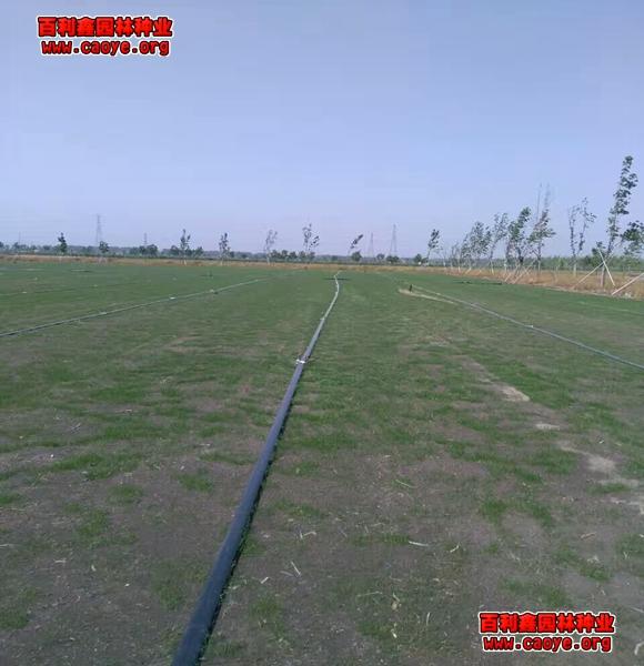 南方地区植草护坡常用草种