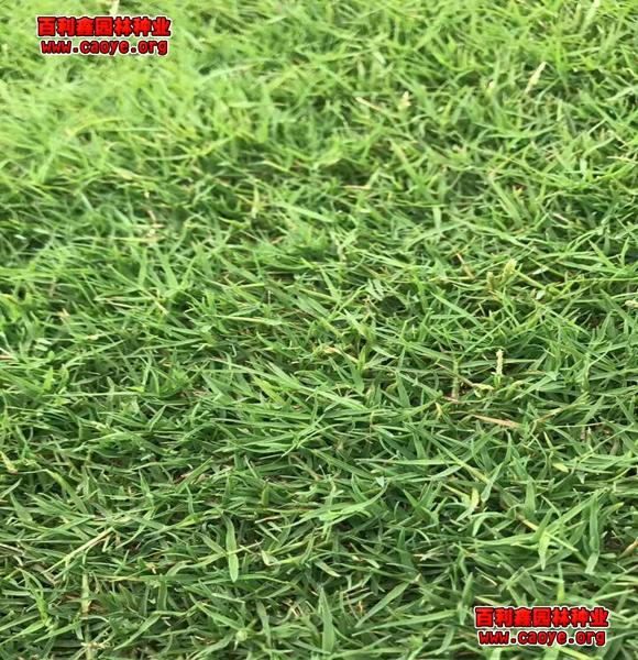 边坡绿化种子配比