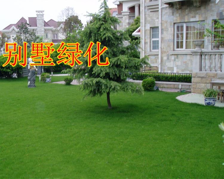 山东哪里有卖草坪的