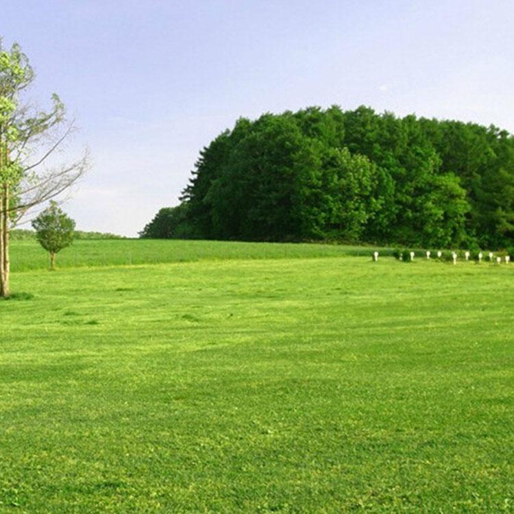 护坡草种子多少钱一斤