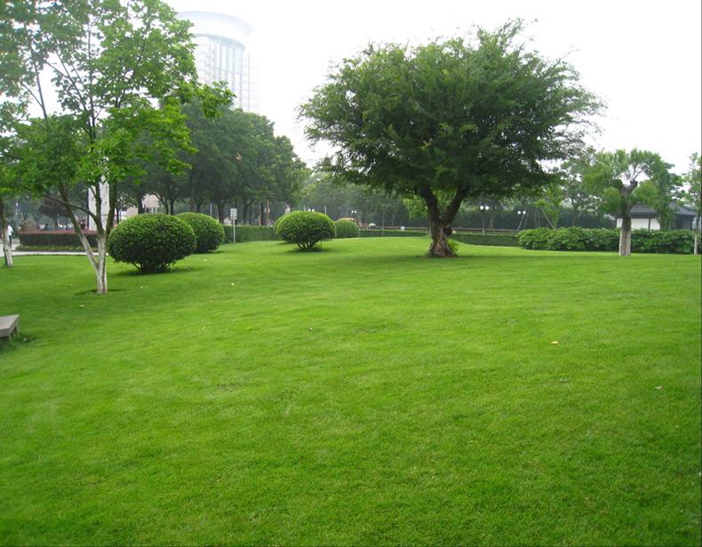 种植草坪对土壤有什么要求