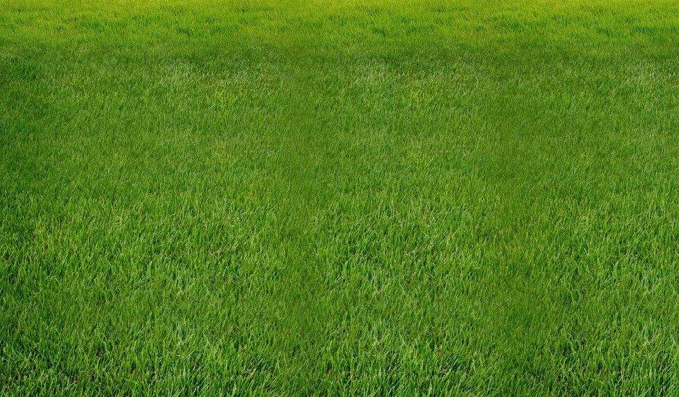 草坪可以防止噪音吗?