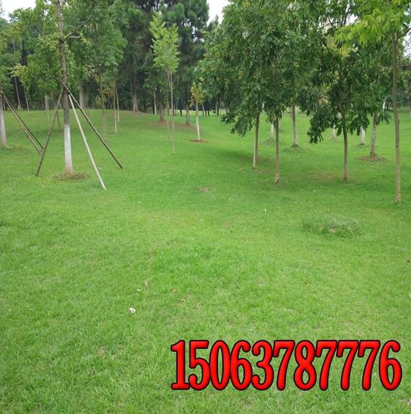 公园草坪的基本养护和管理措施