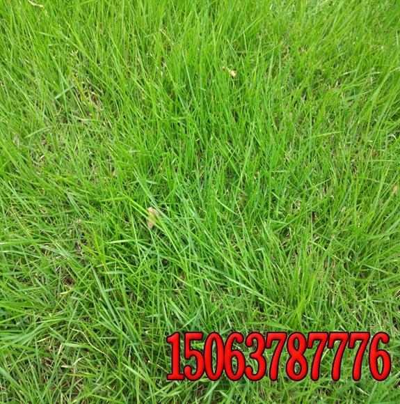 常用草坪除草剂及应用