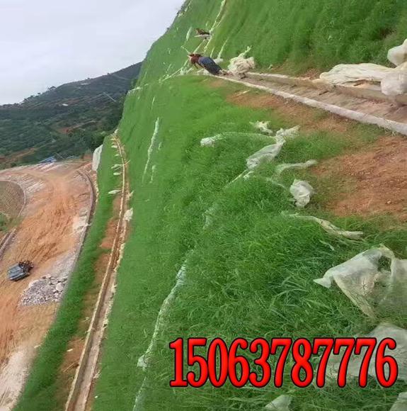 护坡时陡壁垂直绿化法