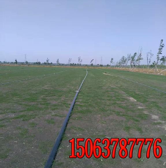 护坡草坪草皮卷的生产过程