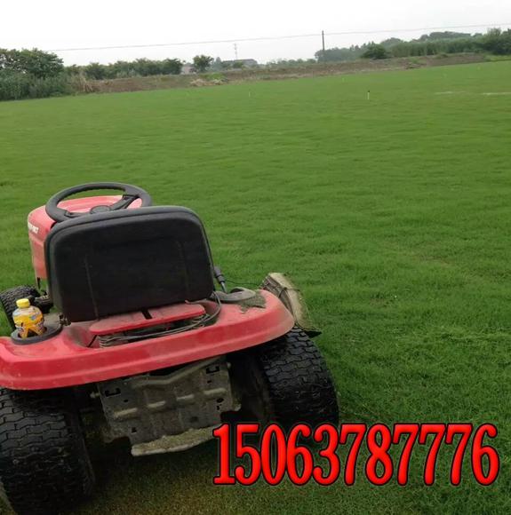 草坪修剪----修剪机