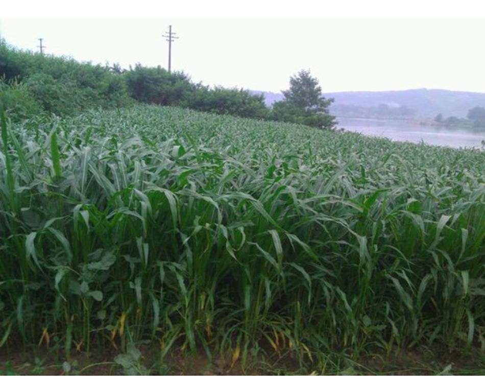 牧草种子贮藏技术要点: