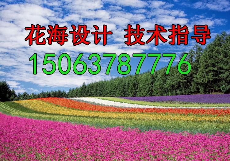 湖北万寿菊种子几月播种最好?