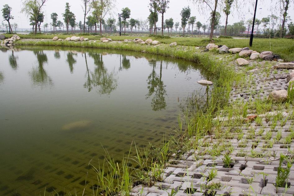 鱼塘边合适种什么草最好?