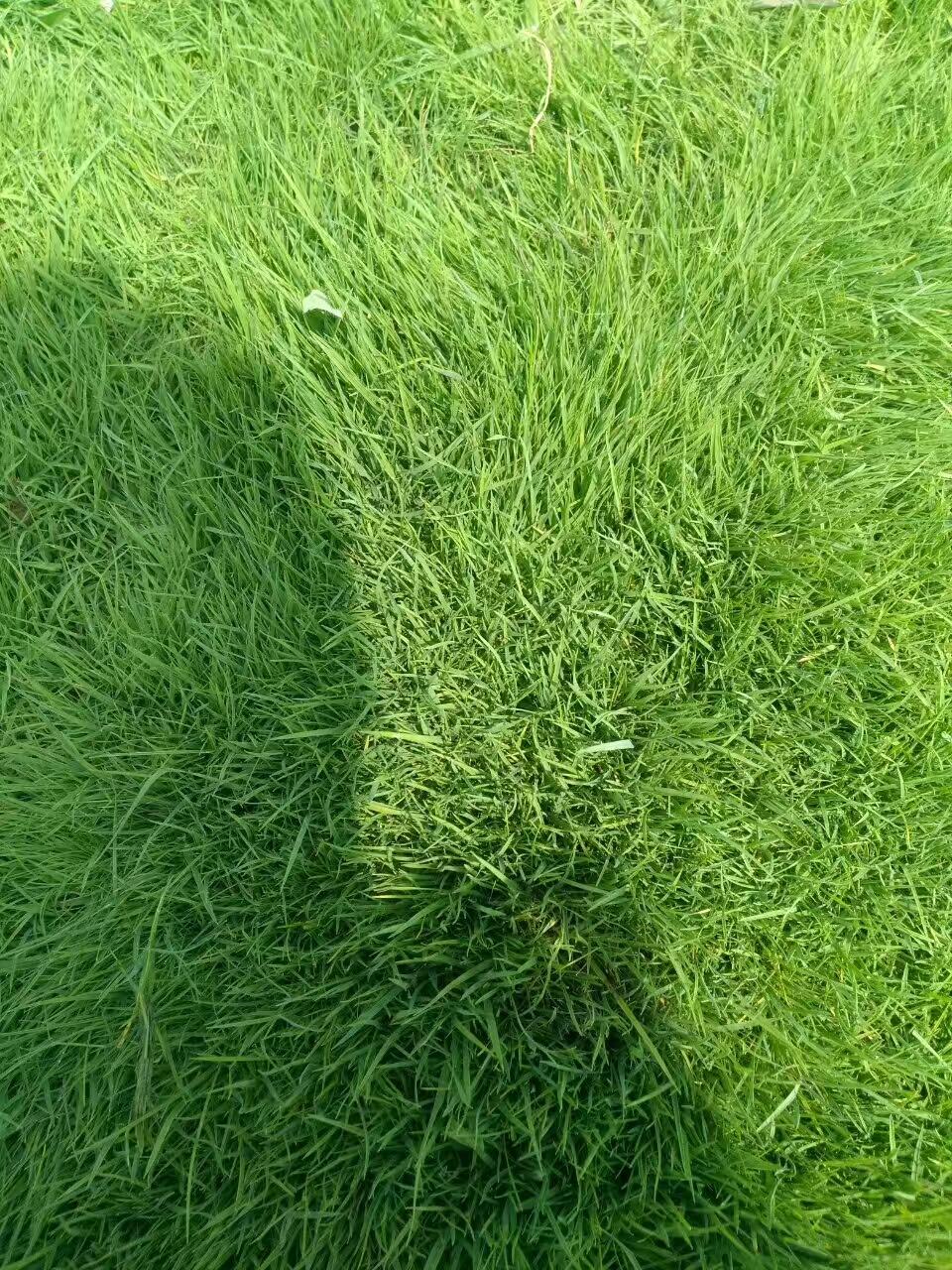 护坡种什么草好 ?