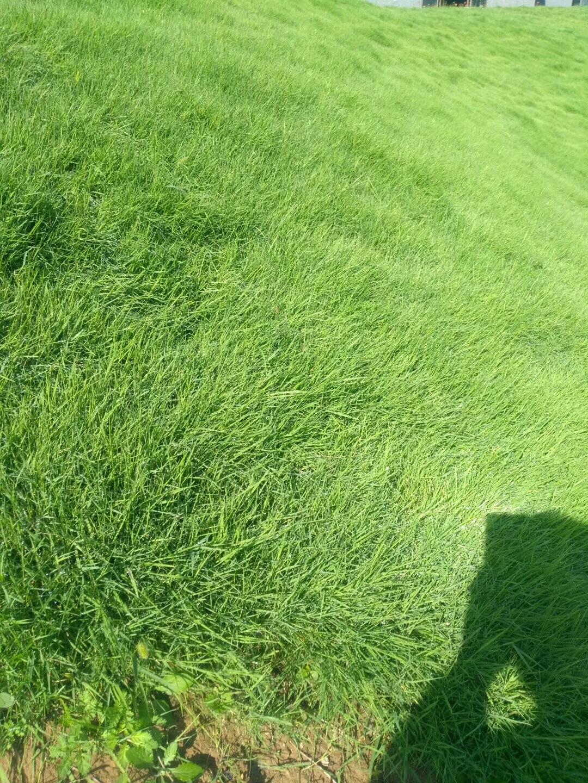 花园里适合种什么草?