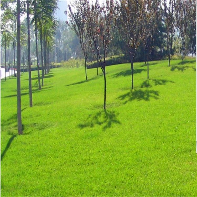 绿化草坪种子什么时候种?多久可以发芽?