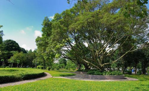 校园绿化的作用和意义