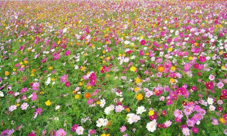 一般南方的花海都是种什么花