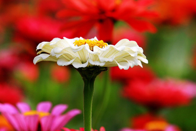 花海花卉种子价格