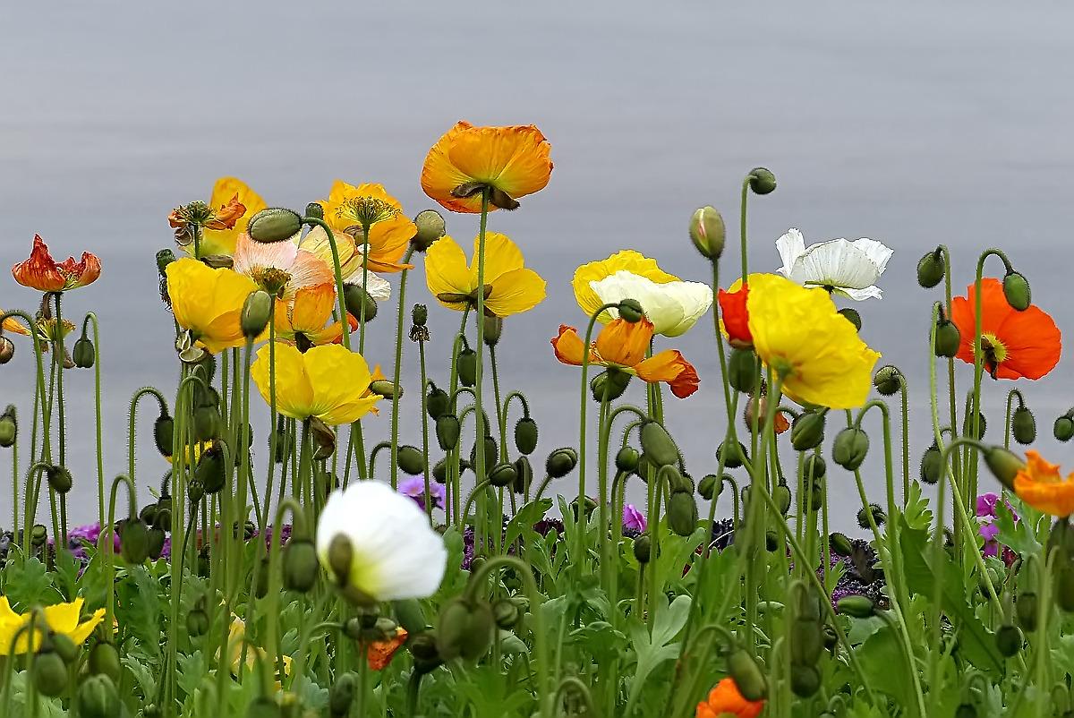 花海花卉种子哪家好?南方种四季花海种什么花好?