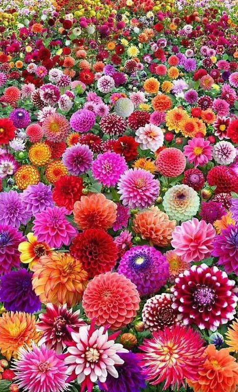 10月种什么草花时间短还能开花吗?
