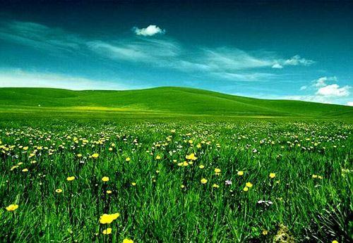 夏季养鹅种什么草 最好