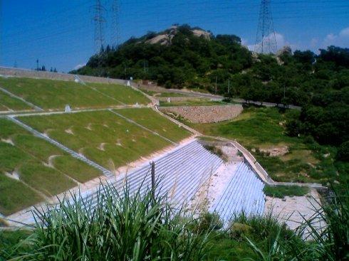 池塘护坡种什么草最好