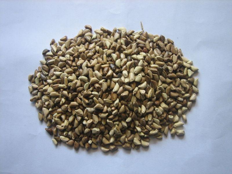山东省适合种什么草,可以喂牛羊的牧草有哪些适合种植