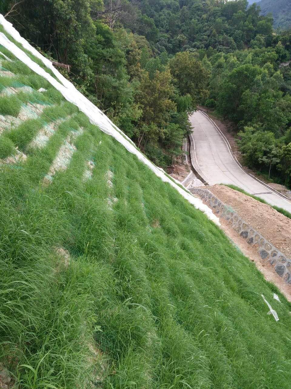 黄土高原种草护坡种什么草好