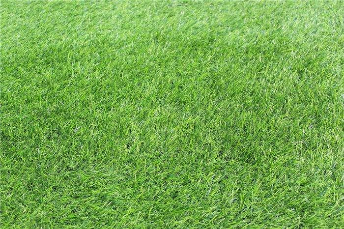足球场草种子批发