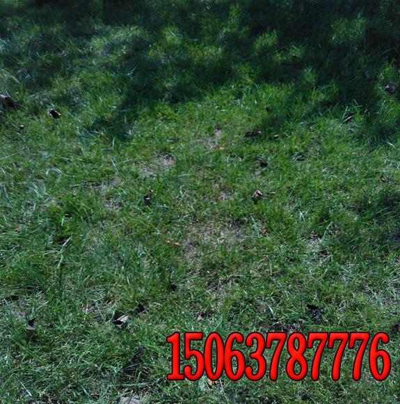 1平方米能撒多少草籽