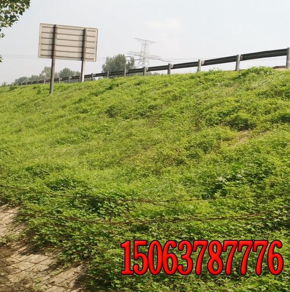 河南优质边坡绿化草种批发