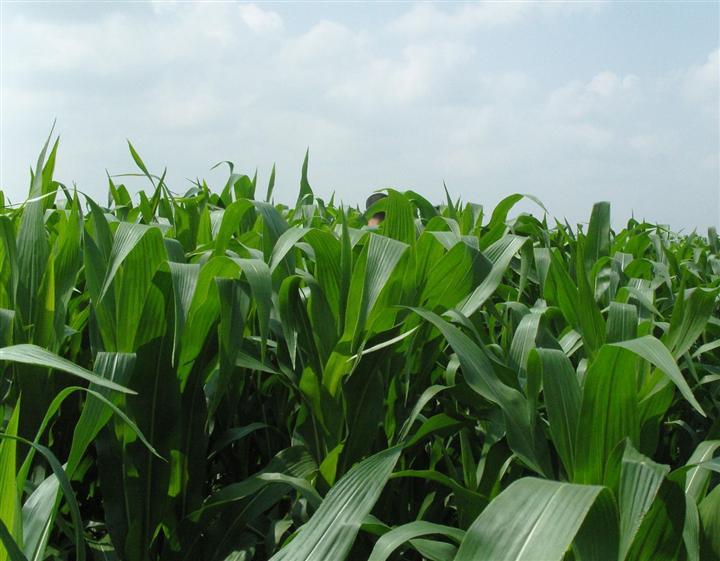 优质牧草草种批发价