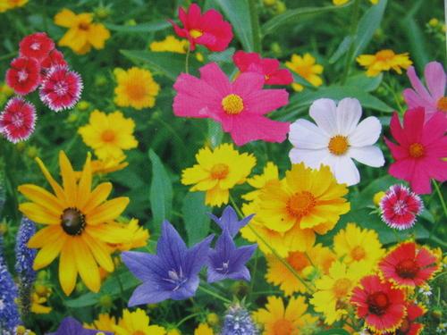 乡村绿化可以用野花组合吗