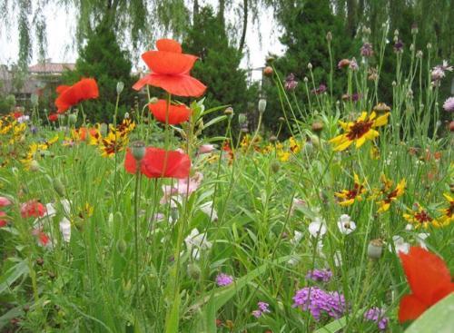 混播草花品种