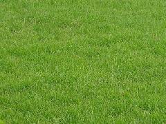 句容混播草坪