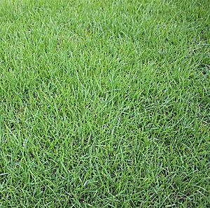 镇江混播草坪