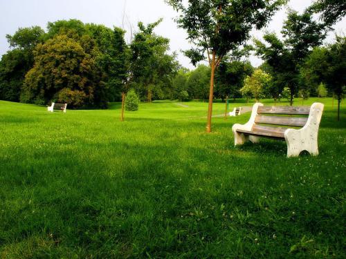 早熟禾混播草坪