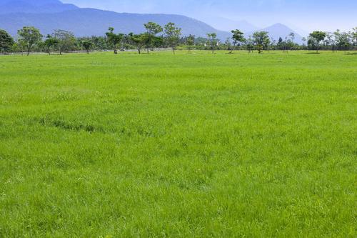 成都混播草坪草种供应