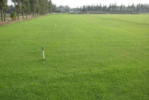 混播草坪的建植与养护管理