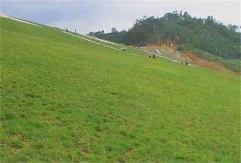 菏泽高速公路护坡用什么草种好