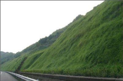 边坡混播草种比例